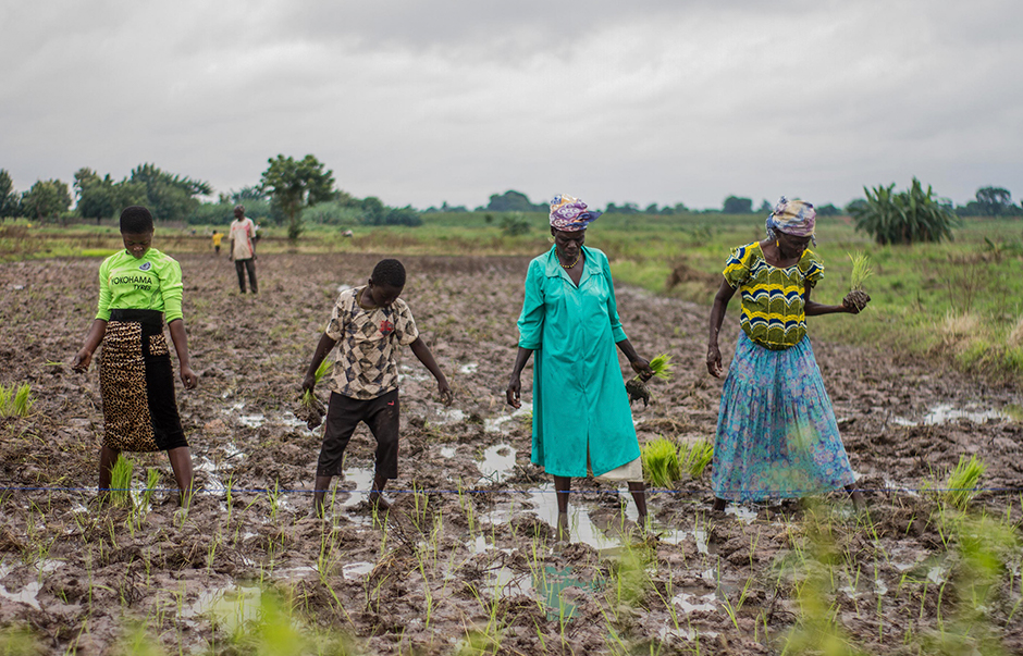 Four African farmers in a muddy field