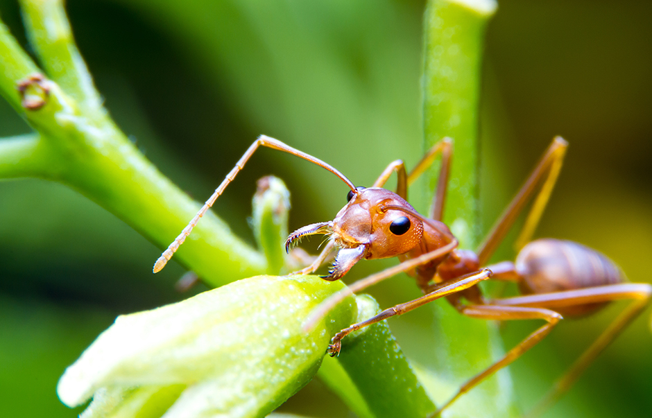 An ant on plant