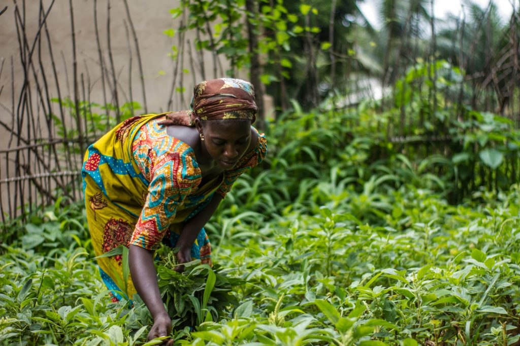 An African female farmer working in a field